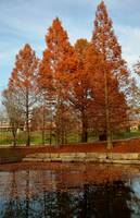 st. peters rec-plex park 11.13.11 580