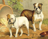 Vintage Painting of English Bulldogs