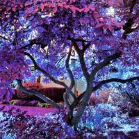 Fantasy colorful tree