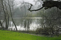Pond near Home Farm, Ilam (30740-RDA)
