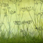 """""""Wildflower Silhouettes Lime Green"""" by CoraNiele"""