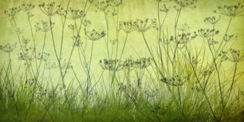 Wildflower Silhouettes Lime Green