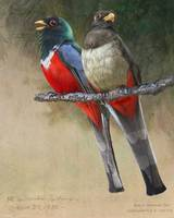 elegant trogons gem of the chiricahuas