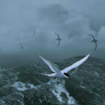 """Terns over Stormy Seas"" by spadecaller"