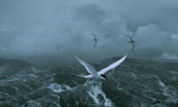 Terns over Stormy Seas
