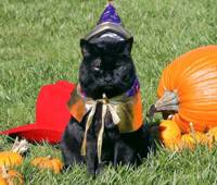 Kitty Cat Dressed for Halloween