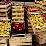 """Autumn Apples"" by raetucker"