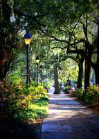 Sunshine on Savannah Sidewalk