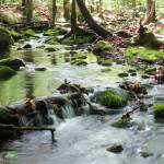 """Mossy stream in the woods"" by bobtravis"