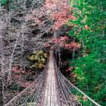 """Bridge To The End Of Autumn_IMG_7001"" by Lorraine_Sommer"