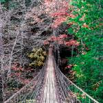 """Bridge To The End Of Autumn 2_IMG_7001"" by Lorraine_Sommer"