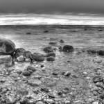 """Grand Traverse Bay in Black and White"" by North22Gallery"