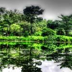 """Tropic Garden Series, Singapore"" by sghomedeco"