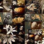 """Flower Collage"" by HWP"
