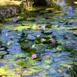 """Southern Lily Pond"" by Groecar"
