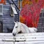 """Autumn Farm With White Horse"" by susansartgallery"