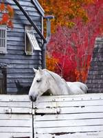 Autumn Farm With White Horse