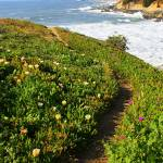 """California Coast Trail"" by Groecar"