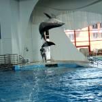 """Dolphin Flip copy"" by Kimmary"