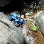 """""""Poison Dart Frogs copy"""" by Kimmary"""