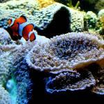 """""""Swim Clown Fish Swim"""" by Kimmary"""