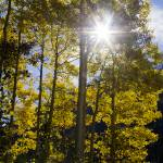 """_MG_3385.Aspen Star"" by SamSherman"