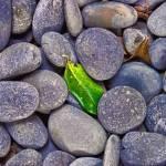 """""""Rocky Landing"""" by WrightFineArt"""