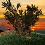 """TreePeople"" by dreamz2designz"