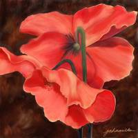 Red Poppy Three
