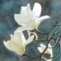 White Magnolia One Pillow