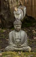 Zen Squirrel