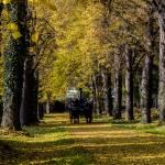 """coach journey in Vienna"" by Minds_eye"