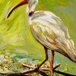 """Florida Ibis"" by ACastelli"