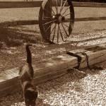 """Catwheel"" by mattkrack"