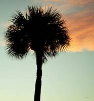 Cocoa Beach Sunset Palm Tree