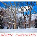 """White Christmas"" by madeline"