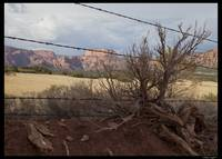 Sagebrush and barbed wire