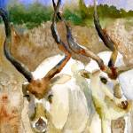 """Israeli Addaxes, wildlife watercolor art"" by schulmanart"