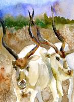 Israeli Addaxes, wildlife watercolor art