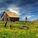 """""""Cabin In A Field Of Flowers"""" by jameseddy"""