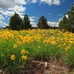 """""""Wildflowers Junipers And Antlers"""" by jameseddy"""