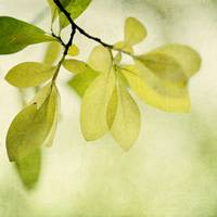 green foliage series