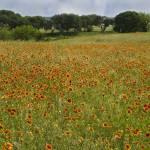 """""""Gillespie County Spring 2"""" by PaulHuchton"""