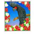 """Black Palm Cockatoo"" by joeyartist"