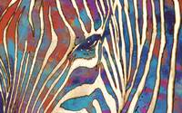 Zebra art - stylised drawing art poster