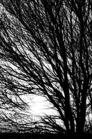 Tree Branches and Light Black and White
