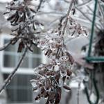 """Deck Plants Wearing Ice 2013"" by PjCreates"