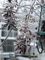 Deck Plants Wearing Ice 2013