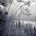 """lonesome woods"" by Piri"