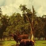 """""""Pastureland"""" by spadecaller"""